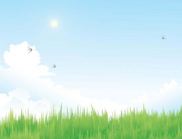 ภาพวิวต้นหญ้ากับก้อนเมฆ