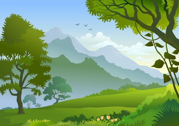 วิวป่าไม้ต้นไม้