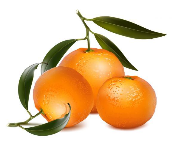 ส้มผลไม้แบบ3D